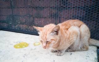 Гнойные выделения у кошки: причины и лечение