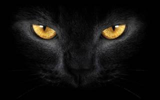Популярные породы чёрных кошек с фотографиями