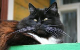 Почему у кота выпадают усы: что делать хозяину