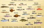 Какие существуют виды морских рыб