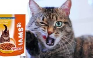 Корм для кошек «Ямс»: описание, состав, отзывы