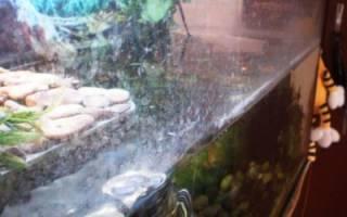 Как отмыть аквариум от известкового налета?