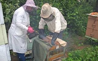 Способы содержания пчел
