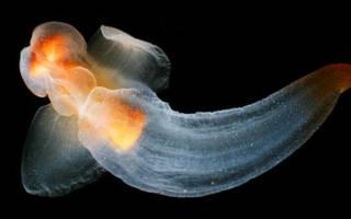 Самые необычные удивительные моллюски в мире