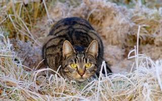 У кошки опухла грудь причины и что делать