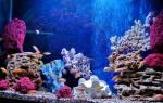 Грот для аквариума: как сделать своими руками