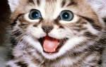 Как лечить горло кошке