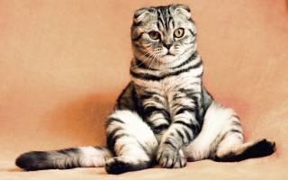Язвочки у кошки на теле причины и лечение