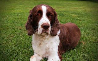 Как лечить запор у щенка