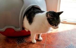Современные гаджеты для кошек