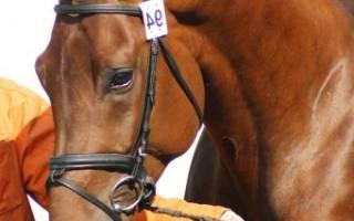 Минимальный возраст лошадей для соревнований