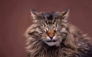 Как вывести блохи у кота Полынью