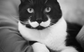 Основные болезни старых кошек и их симптомы