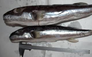 В Крыму поймали тропических рыбок