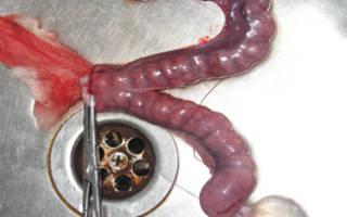 Воспаление матки у кошки лечение