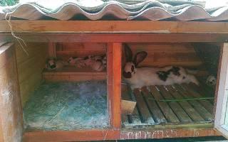 Как сделать родильный ящик для кроликов