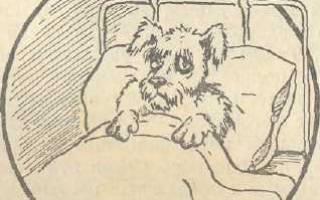 Специфические болезни щенков