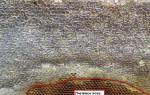 Зимовка пчел различные способы зимовки