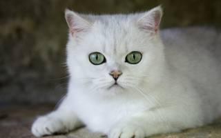 Что делать если у кошки гидронефроз почек