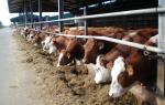 Кормление и содержание молочного стада