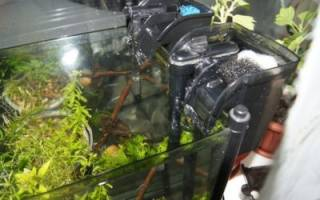 Расположение фильтра в аквариуме