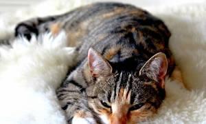 Панкреатит у кота лечение в домашних условиях