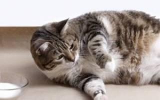 Стерилизация беременной кошки: плюсы и минусы