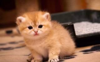 Как приучить кота пить воду из миски