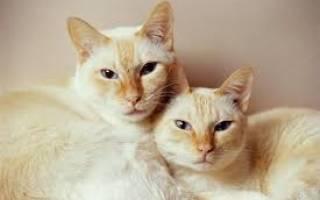 Кот или кошка: кого лучше завести
