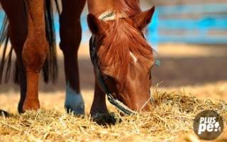 Правильное кормление лошадей полезные советы