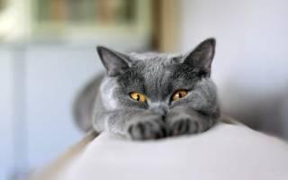 Почему кошка тянет задние лапы