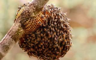 Содержание пчел зимой