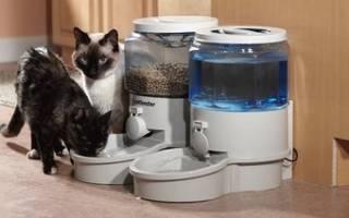 Автоматическая кормушка для кошек как выбрать