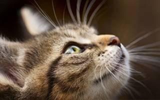 Стоит ли волноваться если у кота выпал ус