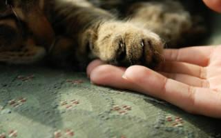 Что нужно знать прежде чем завести кошку