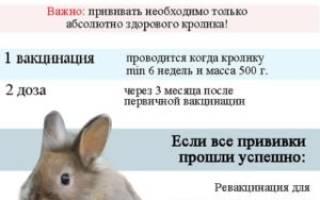 Какие прививки и когда делать кроликам