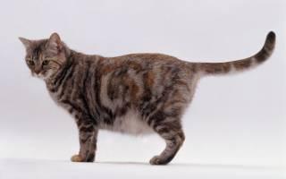 Как определить рожала ли кошка
