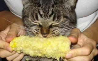 Кукуруза кошкам можно ли давать польза и вред