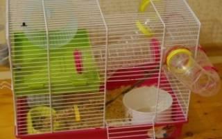 Правильный выбор клетки для домашнего хомяка