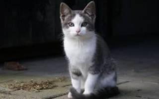 О чем свидетельствуют судороги у кошек