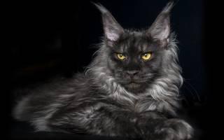 Как лечить отодектоз у кошек