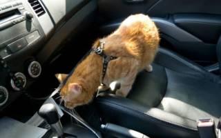 Как правильно перевозить кошку