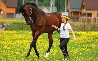 Как обучить лошадь подготовка к верховой езде