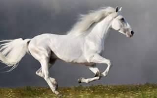 Интересное о лошадях истории коневодов