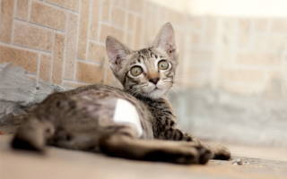 Из-за чего у кота может чесаться спина
