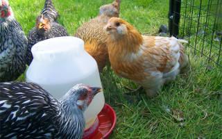 Как сделать поилку для цыплят