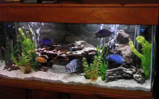 Правила обогрева воды в аквариуме