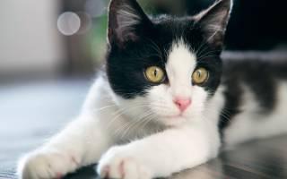 Болезни нервной системы у кошек