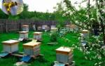 Правила содержания пчел в населенных пунктах