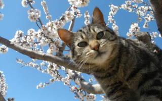 Как распознать и лечить микоплазмоз у кошек